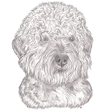 Dandy Dinmont Terrier